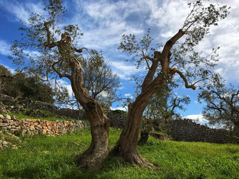 Nature around Corte dei Massapi villa Puglia Italy