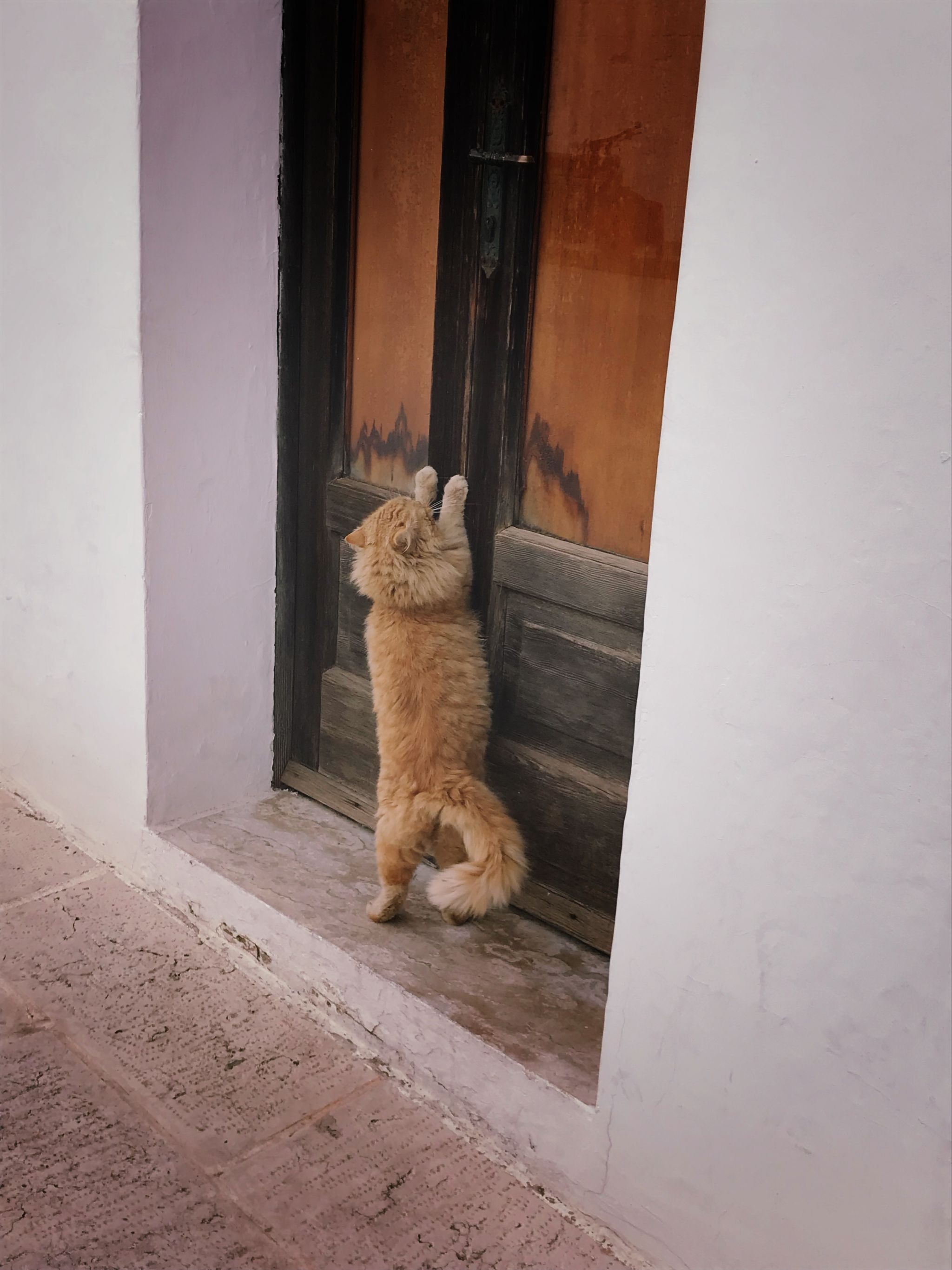 Ginger tomcat in Alberobello Southern Italy