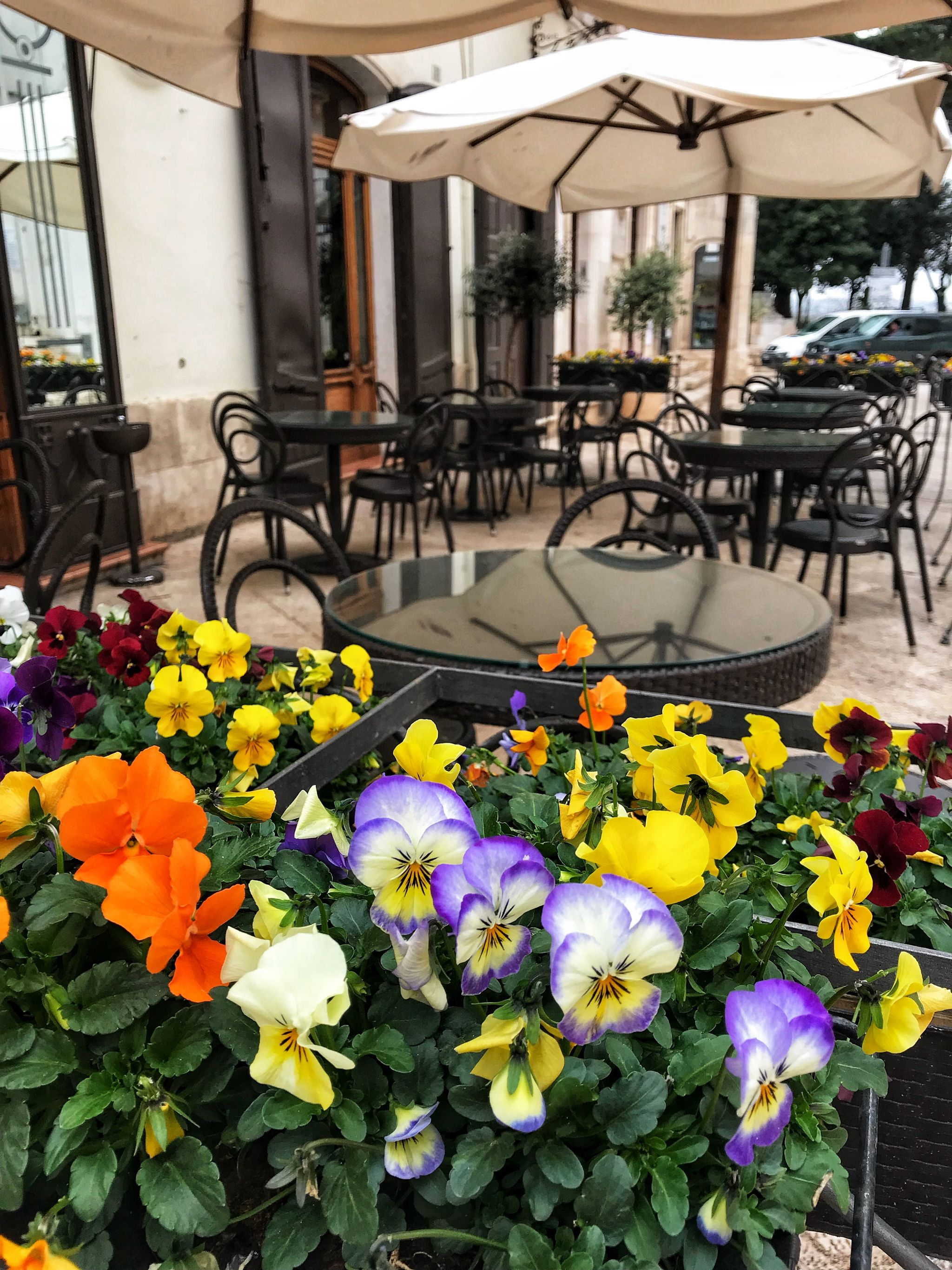 Pansies adorning a restaurant in Locorotondo